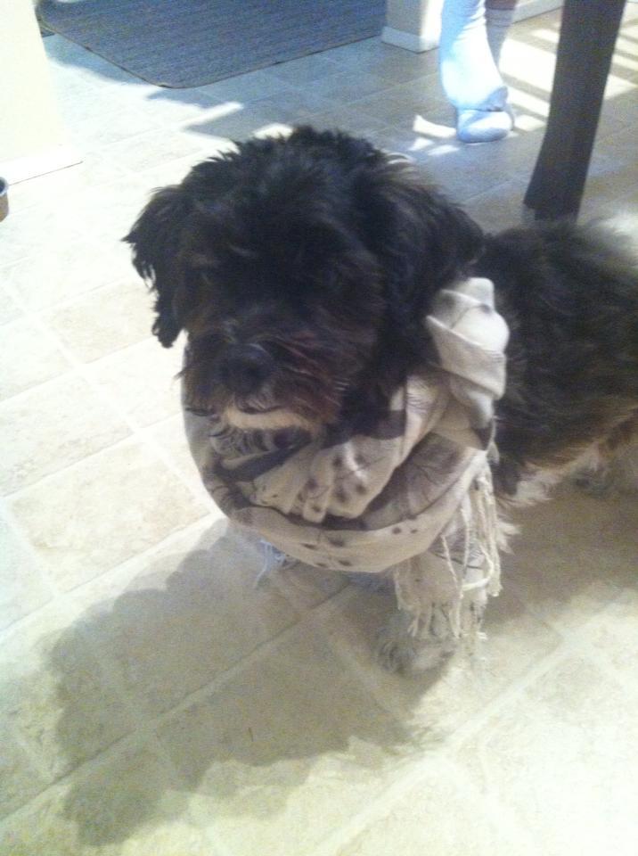 Also here is Benson being hip in my favourite bird scarf.